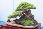 Mản nhãn với dàn cây bonsai đẹp trên đất Yên Tử