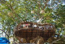 """Tìm hiểu nét độc đáo của quán """"Cafe trên cây"""""""