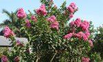 Top 5 cây cảnh dự án công cộng có hoa đẹp rực rỡ