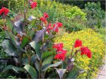 Giới thiệu dự án cây cảnh nổi tiếng Green star garden