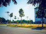 Top 5 cây thân gỗ cổ thụ trồng đường phố hot nhất 2019