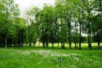 Lợi ích của cây xanh đường phố với cuộc sống con người