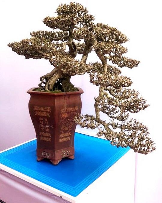 Dáng cây thể hiện sự mềm mại, dịu dàng, sự tươi trẻ... song tiềm ẩn một sức sống mãnh liệt