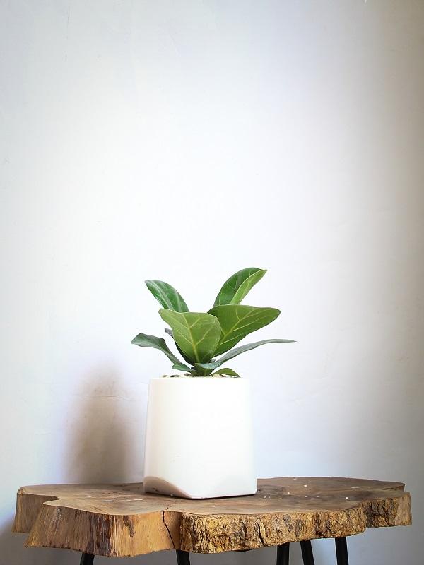 Còn với những cây nhỏ, bạn có thể đặt trên bàn làm việc hay trên kệ tivi, cũng rất thích hợp