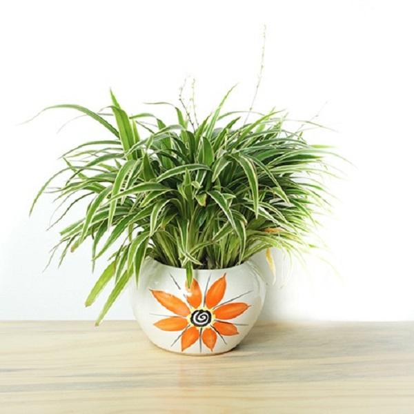 Ở cỏ lan chi luôn toát ra nguồn vượng khí giúp ngôi nhà luôn bình an, hạnh phúc