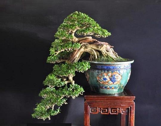 Đây là tác phẩm của nghệ nhân nổi tiếng Trần Thắng