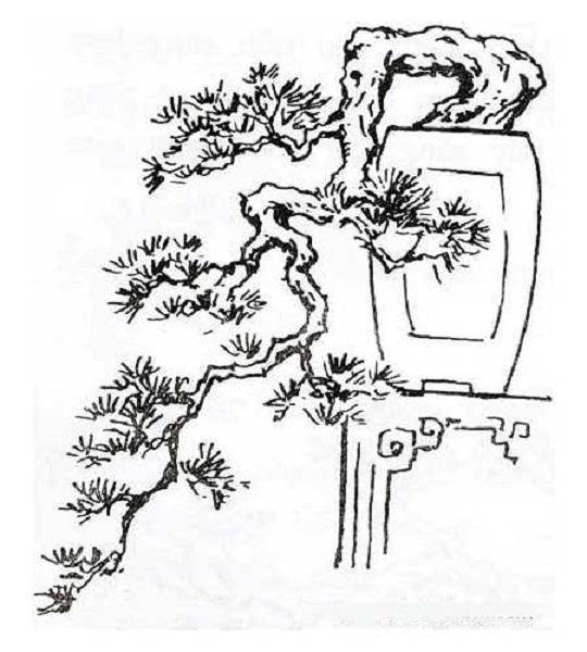Cây kiểng thác nước hay còn gọi là thác đổ thuộc cây cảnh có dáng huyền