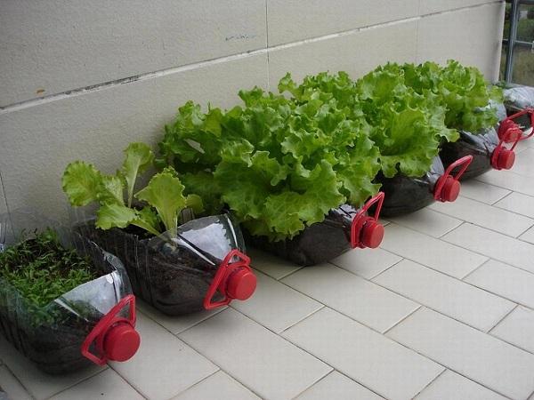 Chai nhựa lớn thích hợp với các loại rau lá to, các loại củ quả