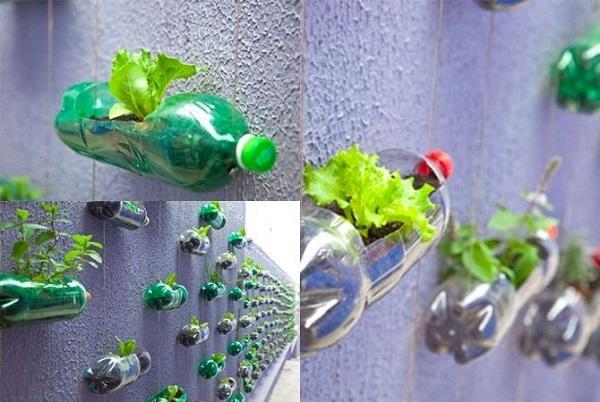 Cách trồng rau trong chai nhựa vừa tiết kiệm lại góp phần bảo vệ môi trường