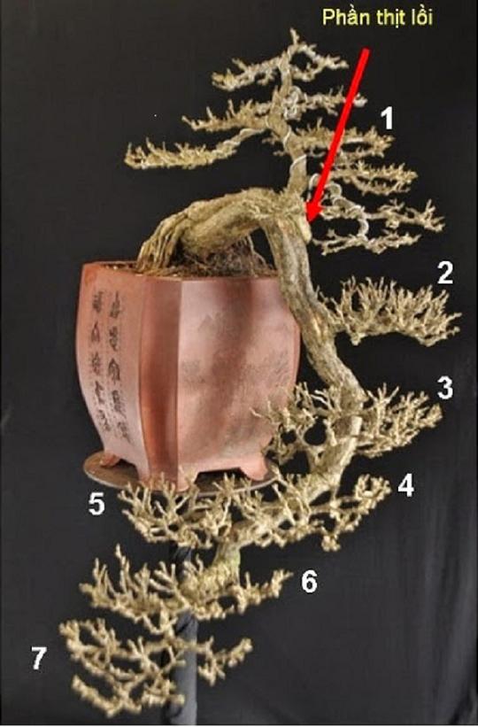 Ban đầu chưa cho cây đổ, các chi từ số 2 trở đi được nuôi trước