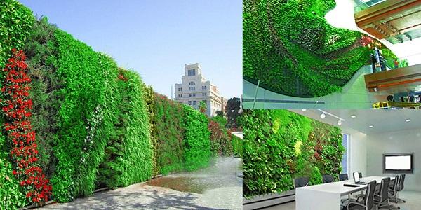 Tường cây xanh như lớp bảo vệ giảm bức xạ mặt trời rất tốt